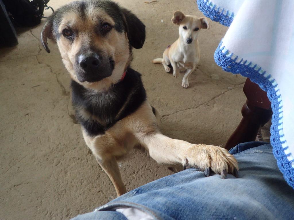 「僕の犬じゃない」が言えない協力隊:英語は2年間で忘れます