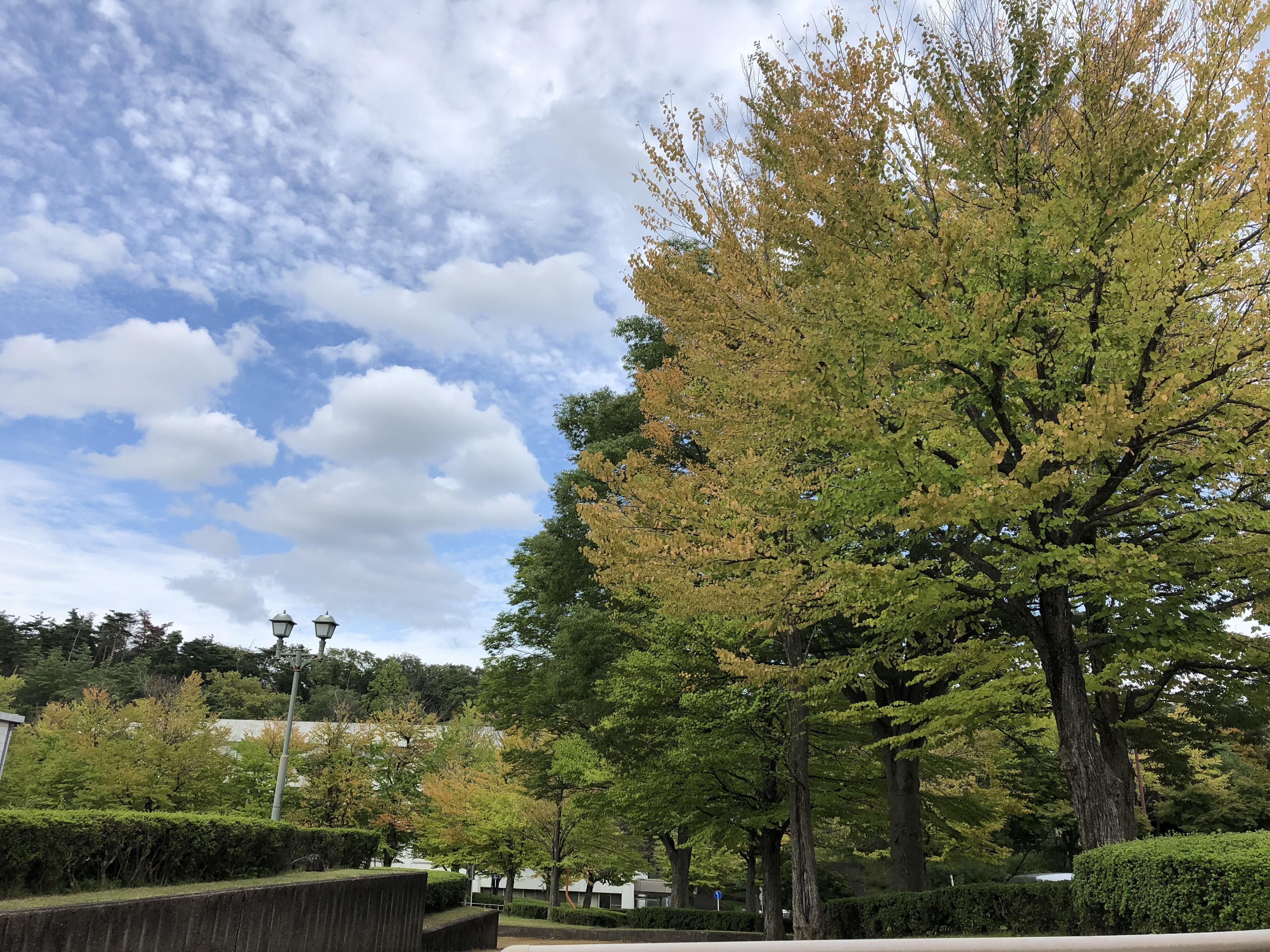 キンモクセイが知らせてくれる秋の訪れ と さつまいもアイス