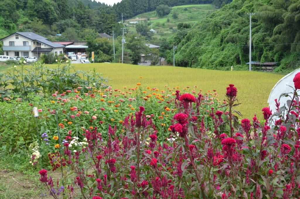 【Español】Muchísimas fotos de Japón!! más de 150