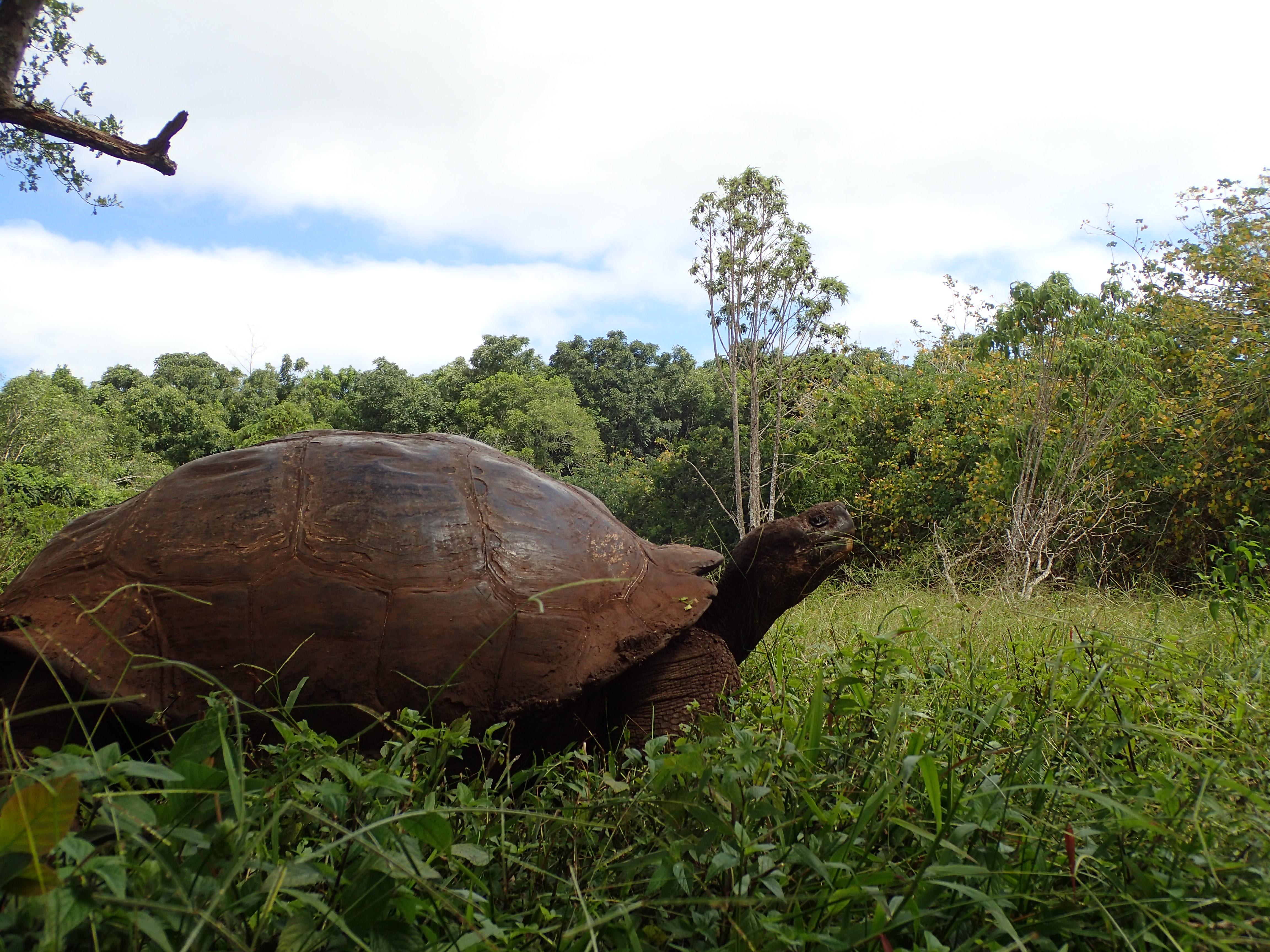 写真で、エクアドルのガラパゴス諸島に行ってみよう!!1日目:ゾウガメの甲羅の中でもそもそする