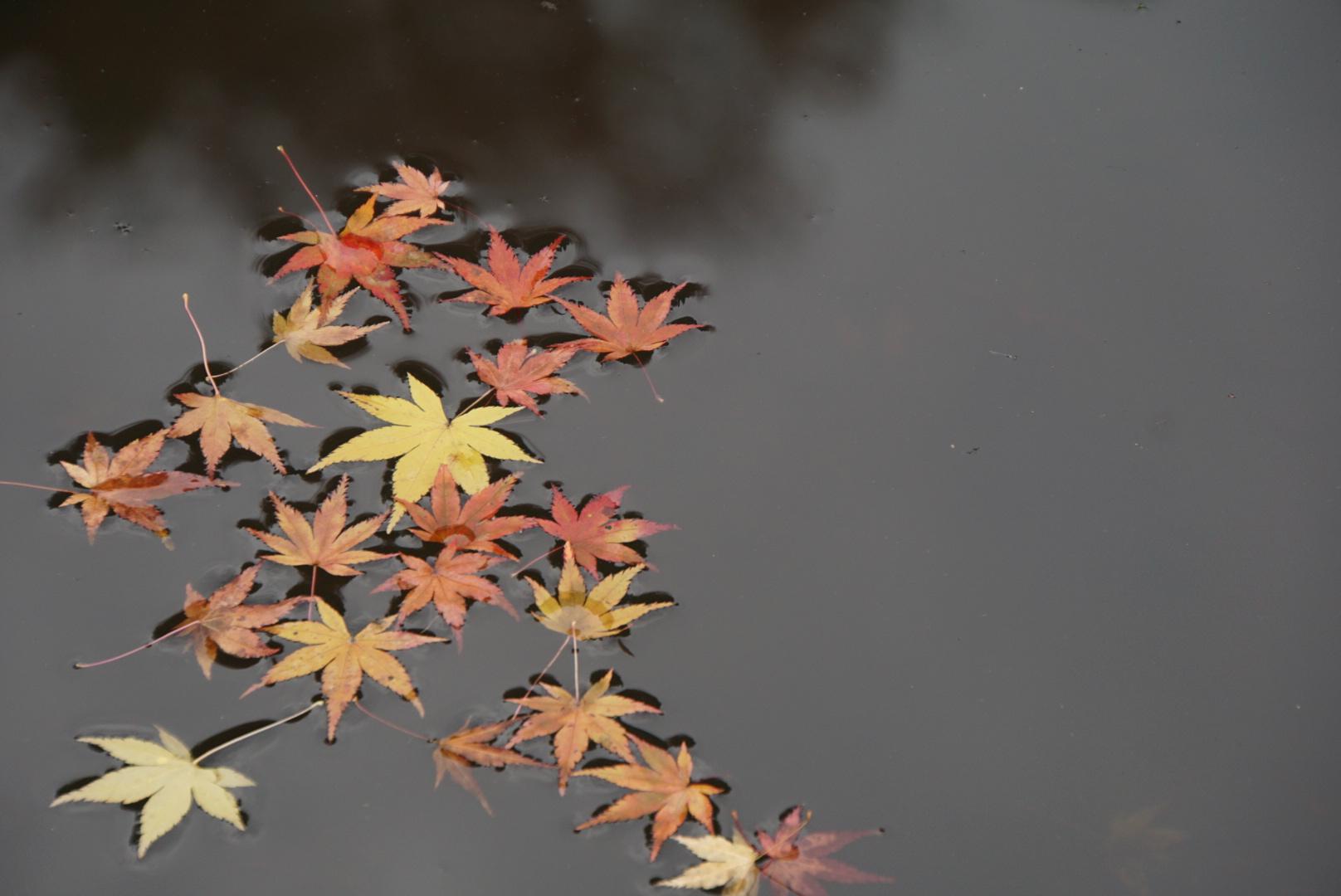 福島の寒さの深淵がわからない無天気予報生活 と 小学生の雨の日フォーメーション