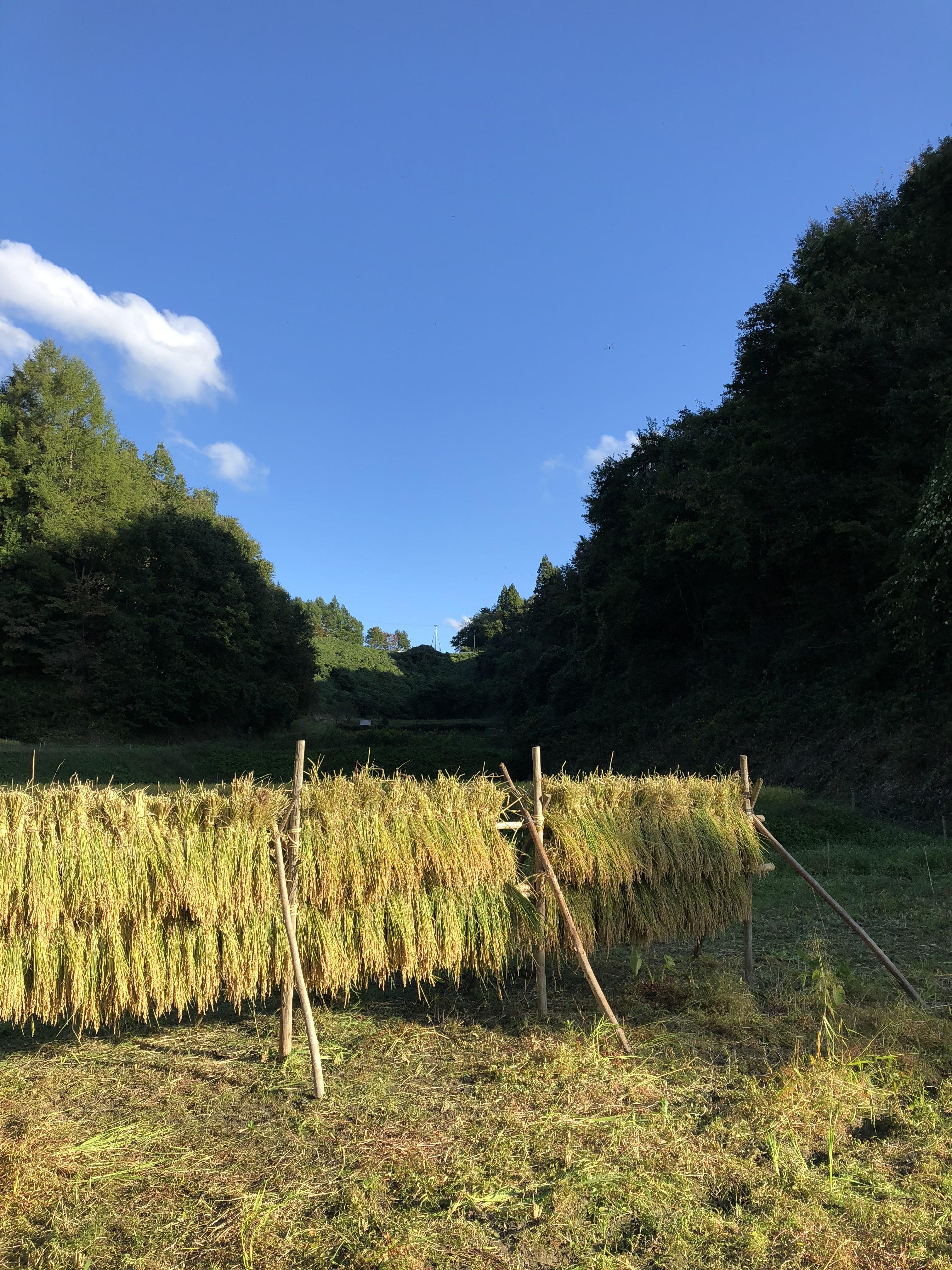 """「有機農業だから良い」というのは、""""絶対""""にありえません!!有機農業は環境に優しいのか?将来の農業のことを真面目に考える"""