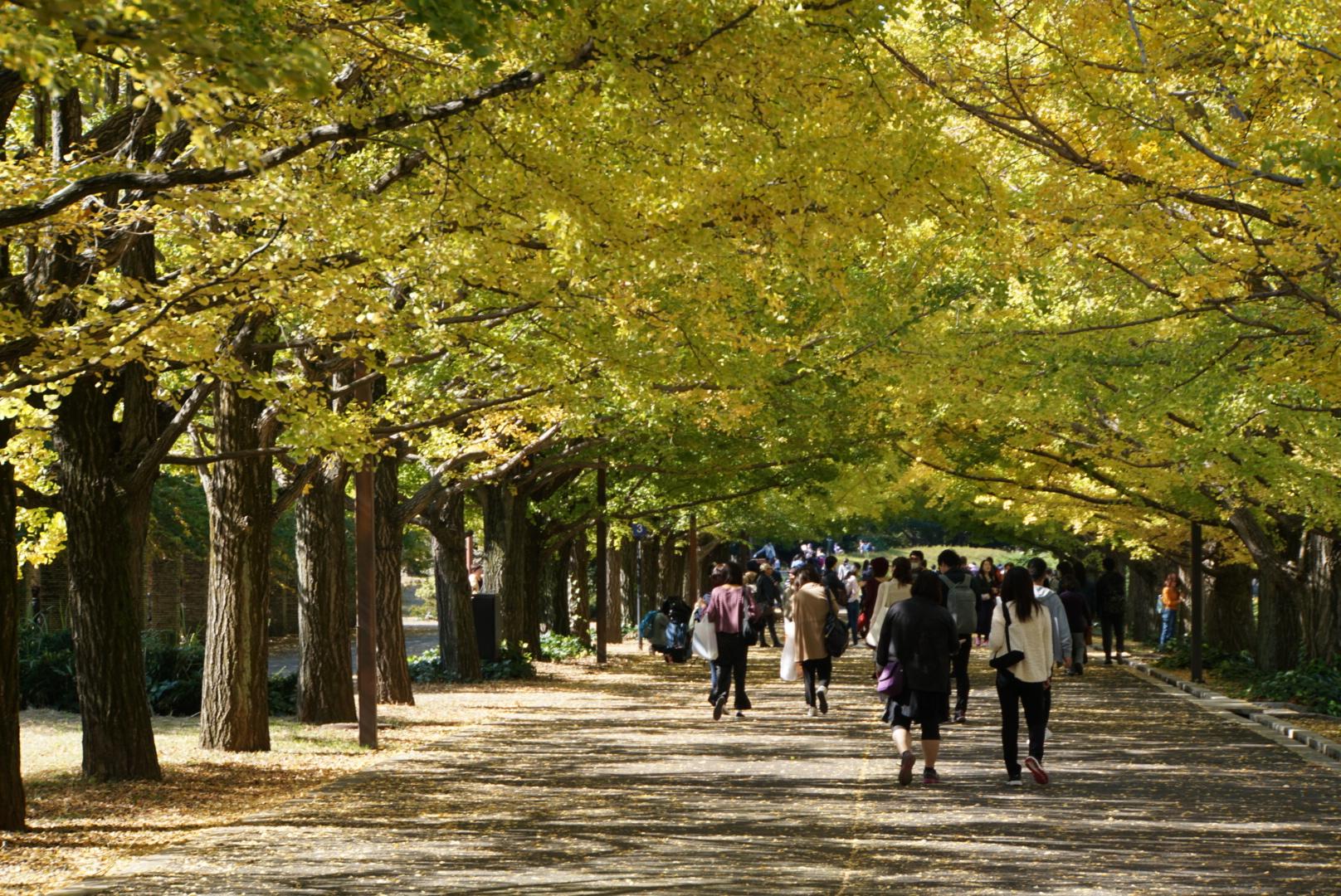 【写真集】落ち葉積もる福島の秋は長く、そして純朴に美しい varias fotos bonitas del otoño que tomé yo