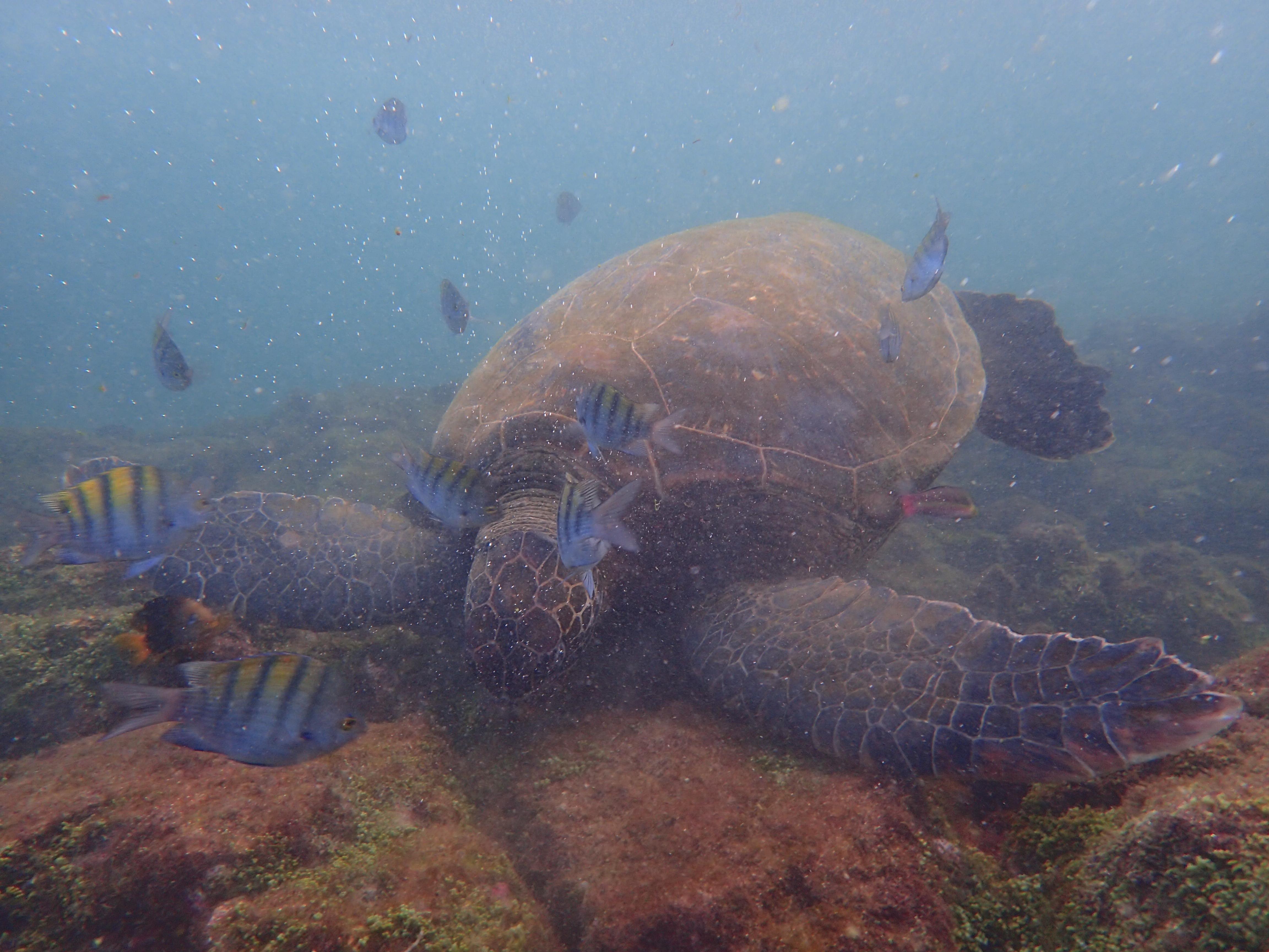 大量の写真とともに、ガラパゴスに行ってみよう!!!3日目:トルトゥーガベイ&共存するのんびり動物たち