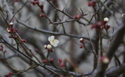 東日本大震災から8年:福島県民になったぼく