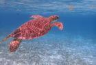 海に潜って、生き物を眺めたい:スキューバーダイビングいいな