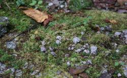 【知ってる?】君が代の時間スケール:さざれ石が巌となる=数億年 【人類・地質・気候】